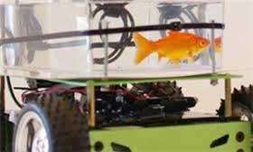 ساخت خودرو ویژه ماهیها