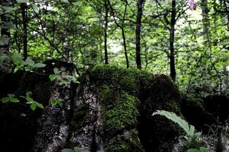 سفری لذت بخش به جنگل و آبگرم لاویج + تصاویر