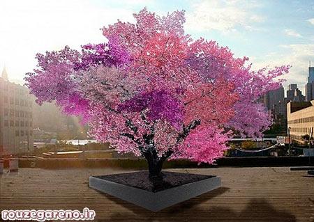 درختی با چهل میوه متفاوت!